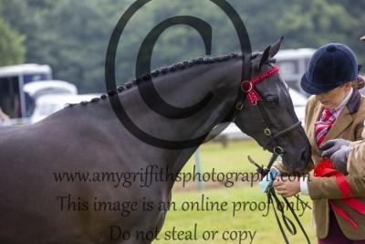 Class 65- Riding Pony/Hunter Pony 2,3 Year Old