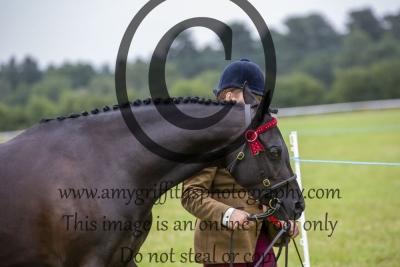 Riding Pony/Hunter Pony Championship
