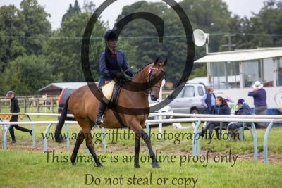 Class 70- Hack/ Riding Horse