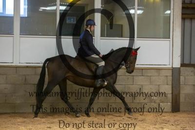 Class 42 – Show Pony/ Riding Horse/ Hack
