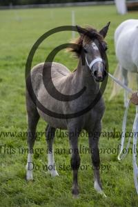 Class 9 – Foal