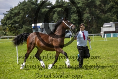 Class 46 – Yearling Filly