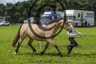Class 50 – 3 year old Filly
