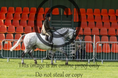 Class 501 – Horse of the Year Show Small Show Hunter