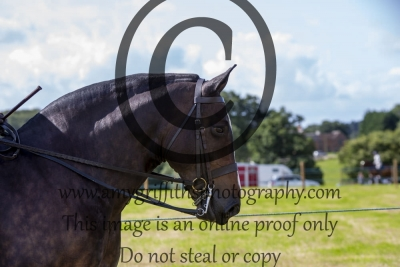 Class 521 – Horse of the Year Show Maxi Cob