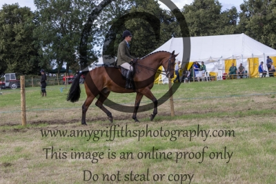 Class 530 – The Riding Club Show Horse