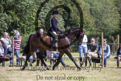 Class 525 – Horse of the Year Show Large Hack