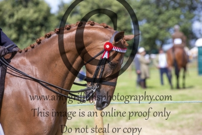 Class 524 – Horse of the Year Show Small Hack