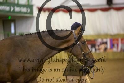 Class 3- Sports Horse Type