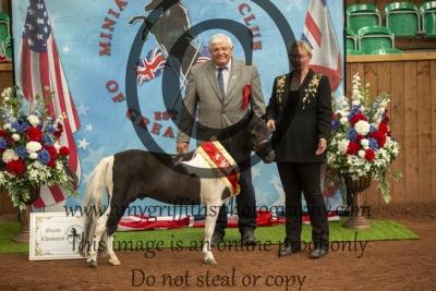 Amateur Grand Stallion