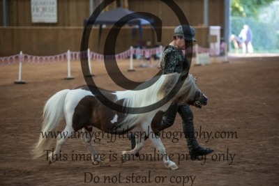 Grand Champion Scaled Down Show Horse