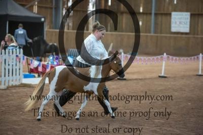 Grand Champion Colt or Stallion