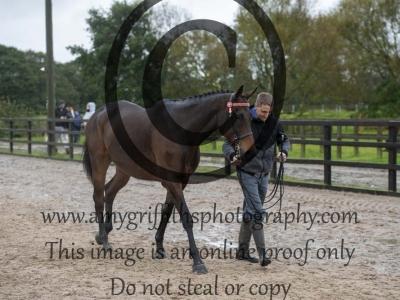 Class 7 – Inhand Ex Racehorse