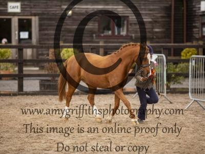 Senior Horse or Pony Championship