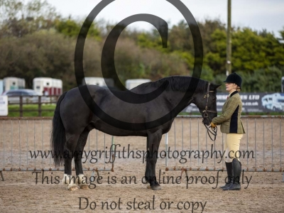 Class 17 – Inhand Horse or Pony with a Blemish