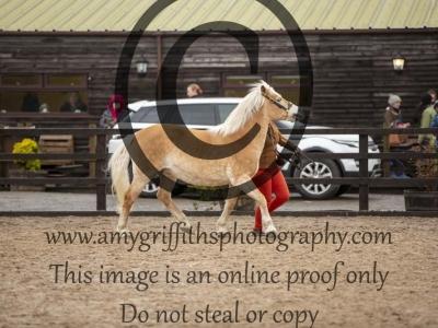 Class 13 – Inhand Senior Horse or Pony 15-19 years