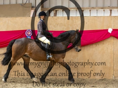 Ridden Senior Horse Championship