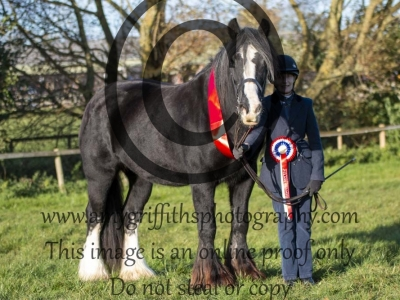 Class 98 – Inhand Heavy Horse Pure or Part Bred