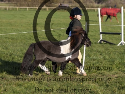 Class 99 – Inhand Rescue Horse or Pony