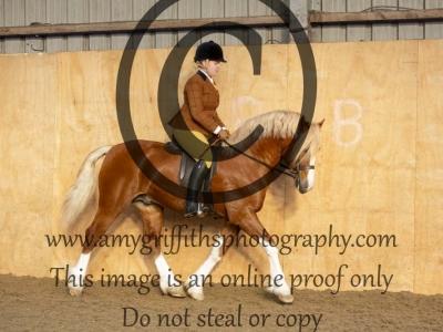 Class 123 – True Novice Horse or Pony