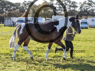 Class 95 – Inhand Senior Horse or Pony 15-19 years