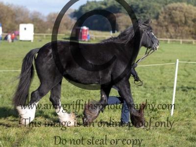 Class 96 – Inhand Senior Horse or Pony 20 years +