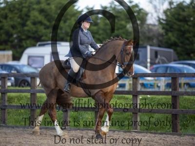 Class 132 – Novice Ridden Show Horse/Hunter exc 148cm