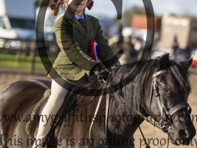 Class 149 – Ridden M&M Small Breeds exc Welsh