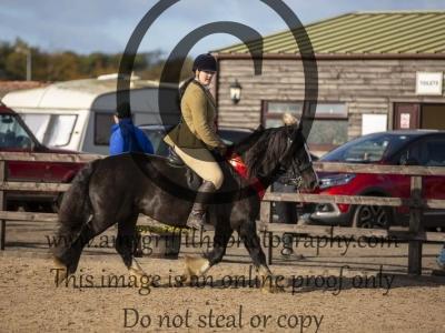 Class 145 –  Ridden Pure & Part Bred Heavy Horse