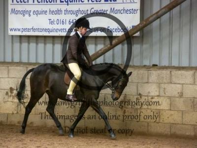 Class 25 – Show Hunter/Show Pony