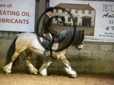 Class 39 – Equitation 17 years & over