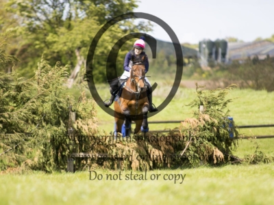 Class 8- Open Horse & Pony
