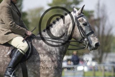 Class 85 – Novice Horse