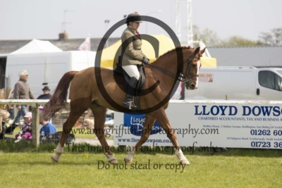 Class 88 – Sports Horse