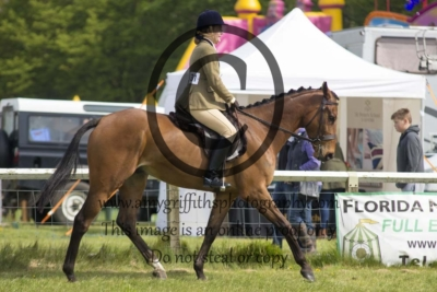 Class 96 – Race Horse to Riding Horse