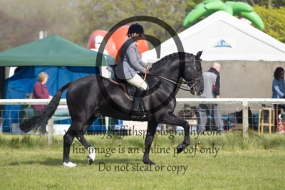 Class 100 – Ridden Gelding/Stallion