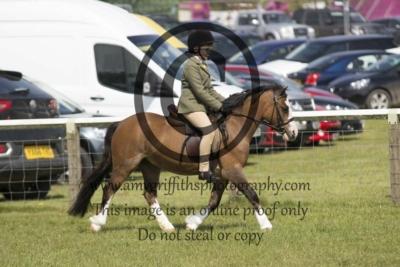 Class 57 – Novice Pony