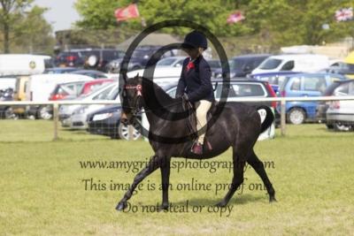 Class 60 – Show Ponies