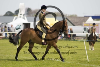 Class 61 – Show Hunter Ponies