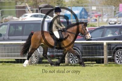 Class 59 – Ridden Pony