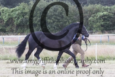 Class 48 – 3 year old Colt