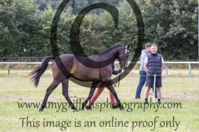 Class 13- WPB Yearling Colt