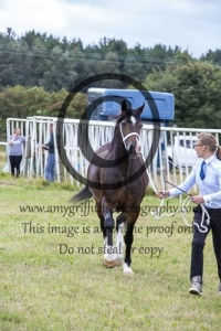 Class 47- D 2YR Old Filly