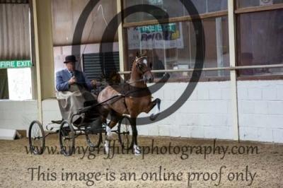 Class 1 – Novice Hackney Pony