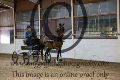 Class 3 – Novice Hackney Horse