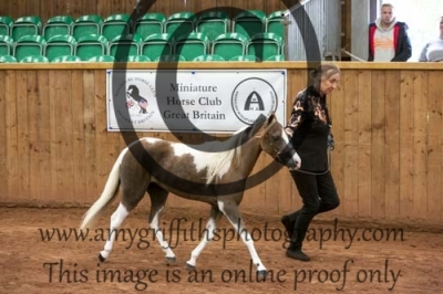 Class 48- Gelding – Any Age, Any Sex