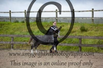 Class 1a- Foals