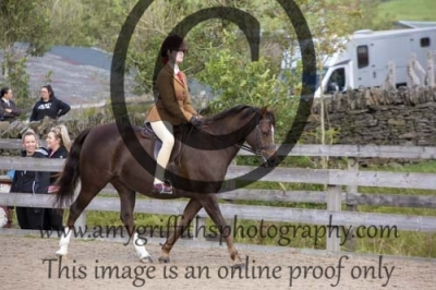 Class 28- Equitation 16 years and under