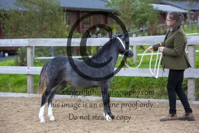 Class 1- Foals