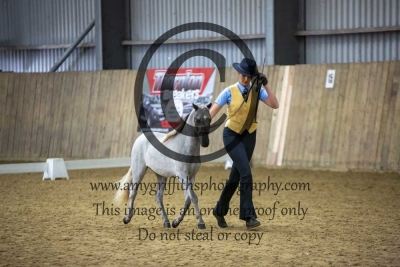 Class 14 – Refined Midi Horse Yearling